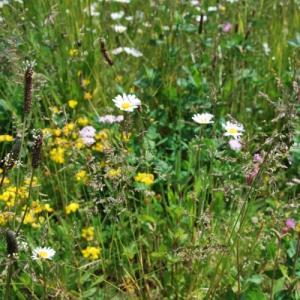Mata wegetacyjna zpolnymi kwiatami