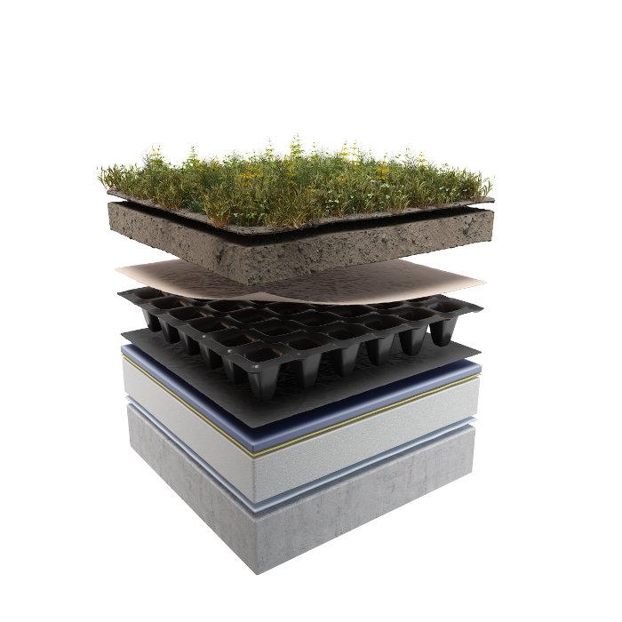 dach-zielony-ekstensywny04-1